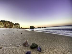 Postal: Conchas y piedras sobre la arena de una playa