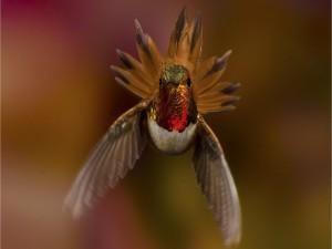 Frente a un colibrí