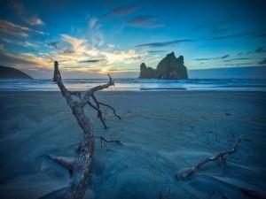Troncos en la arena de una playa