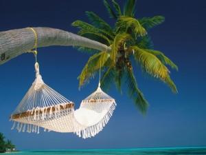 Postal: Hamaca blanca en una palmera