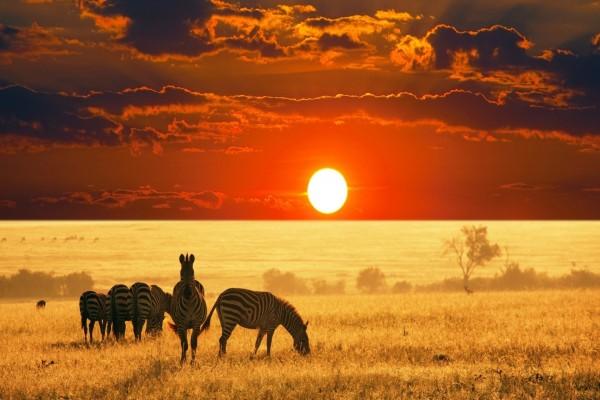 Gran sol africano iluminando a las cebras