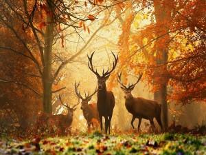 Postal: Ciervos con gran cornamenta en un bosque