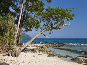 Árboles en una playa