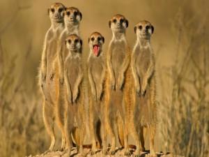 Postal: Unos divertidos suricartas