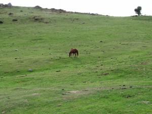 Caballo en un gran prado verde