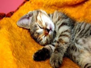 Postal: Gato dormido sobre una manta amarilla