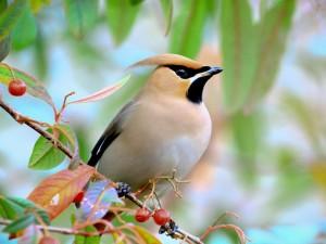 Pájaro en una rama con bayas