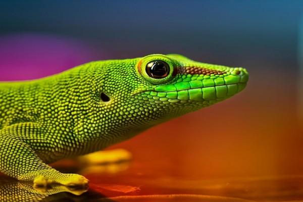 Cabeza y patas delanteras de un lagarto verde