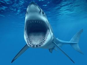 Postal: Grandes mandíbulas de un tiburón blanco