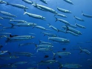 Postal: Banco de peces