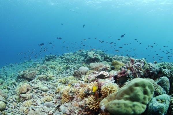 Pequeños peces nadando cerca de los corales