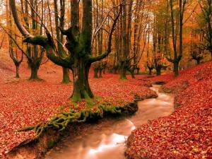Hermoso bosque en otoño