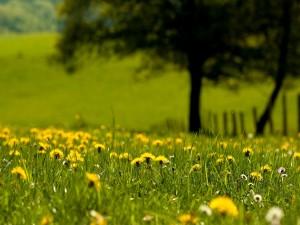 Flores amarillas en un prado verde
