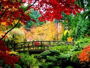 Puente entre árboles de colores