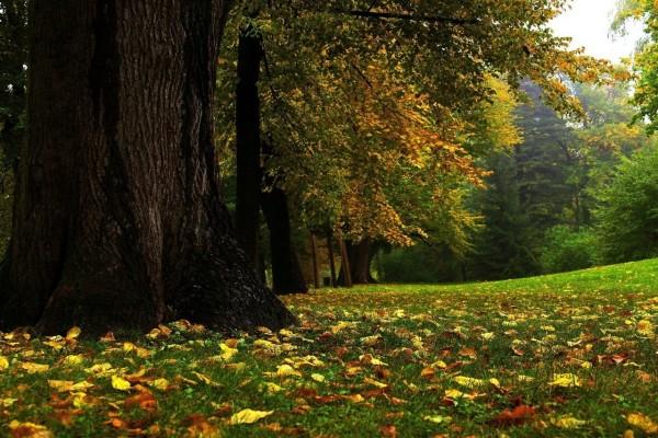 Bosque al comienzo del otoño