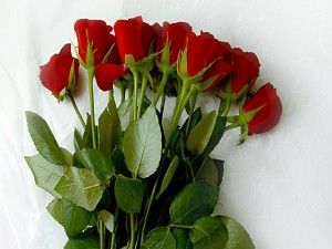 Quince rosas rojas