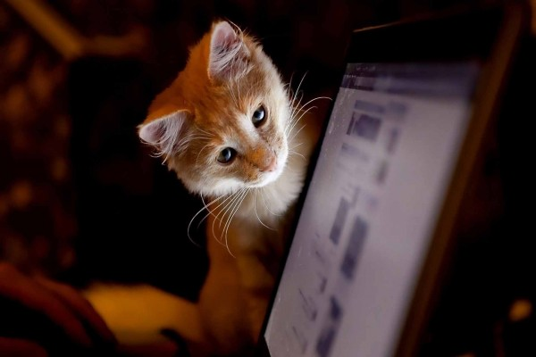 Gatito mirando la pantalla de un ordenador