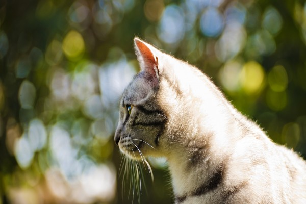 El perfil de un bonito gato