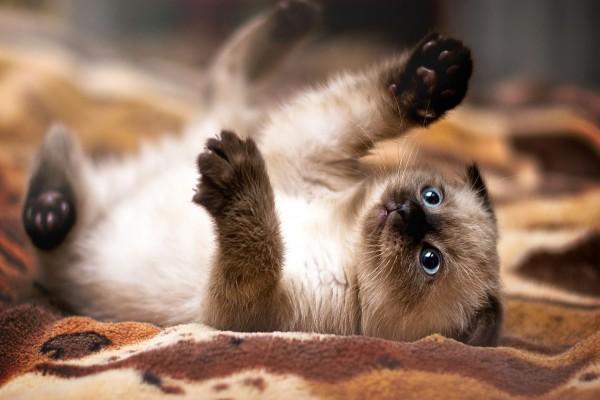 Gatito observando sus patas