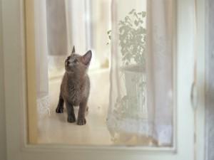Gatito tras una ventana