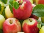 Manzanas recién cortadas