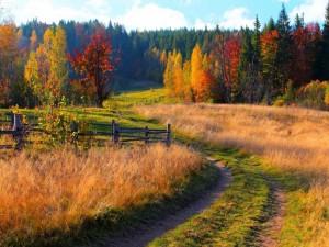 Postal: Camino hacia un bosque otoñal