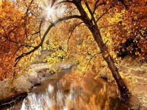 Árbol otoñal junto a un río