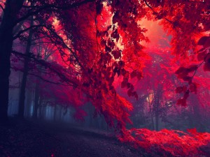 Postal: Bosque rojo