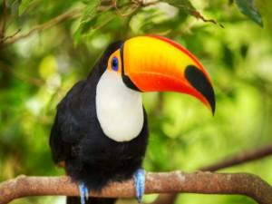 Un bonito tucán posado en una rama