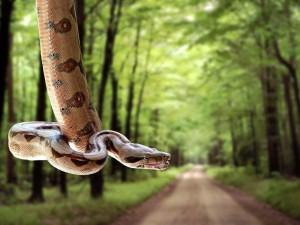 Serpiente colgada en medio de un camino