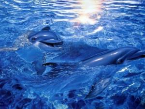 Postal: Delfines 3D en el agua azul