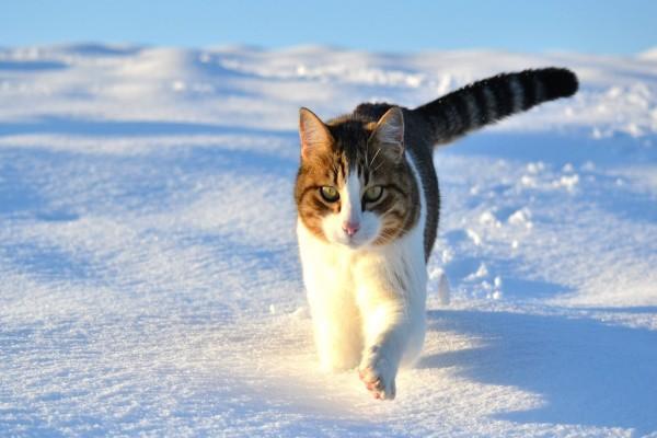 Un gato corriendo sobre la nieve