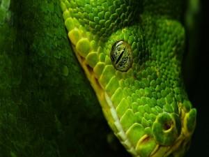La cabeza de una serpiente verde