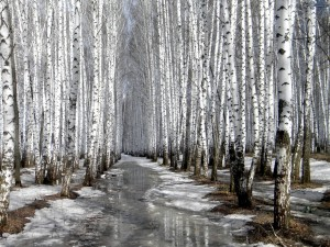 Un bosque helado