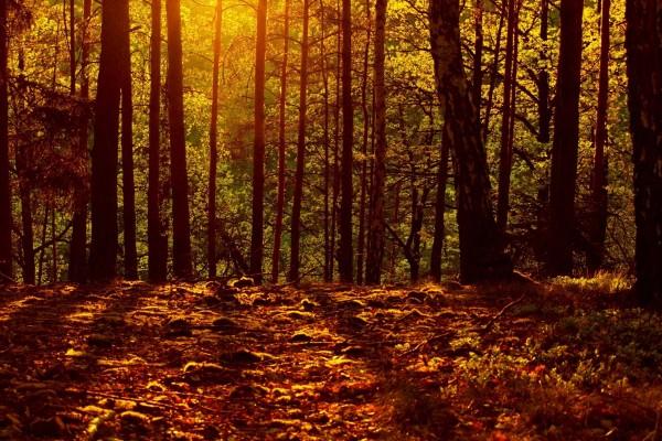 Sol iluminando el corazón del bosque