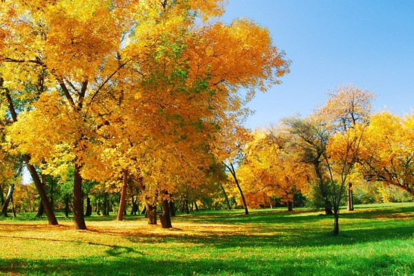Árboles otoñales sobre la hierba verde