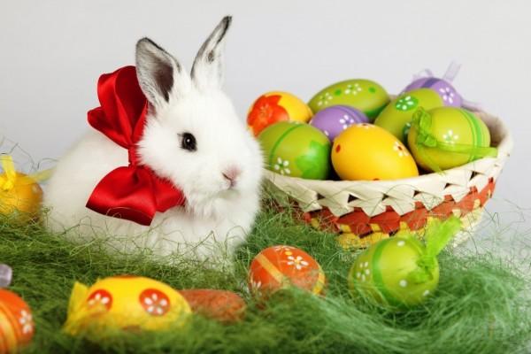 Huevos de Pascua junto a un tierno y adorable conejito blanco