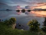 Flores junto al lago al amanecer