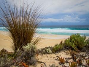 Plantas en una playa
