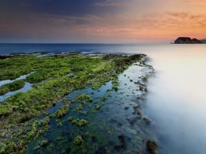Algas sobre las rocas marinas