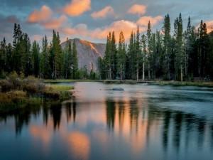 Árboles reflejados en un lago del Parque Nacional de Yosemite
