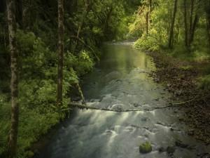 Un arroyo corriendo entre árboles y arbustos