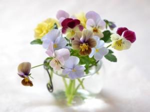 Bonitos pensamientos en un florero