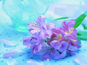Astromelias color púrpura