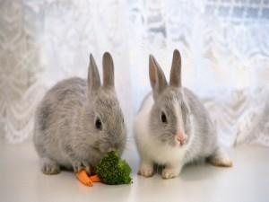 Conejitos comiendo zanahorias y brócoli