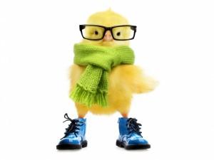 Un divertido pollito con gafas, bufanda y botas