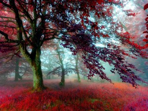 Un bosque rojizo