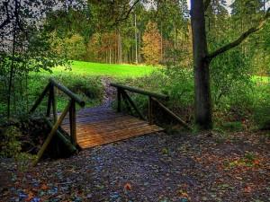 Pasarela de madera en un bosque