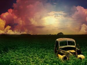 Coche abandonado entre el trigo verde