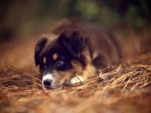 Un hermoso cachorro